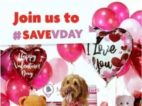 Family Dollar (Join Us To Save Valentines Day) Flyer