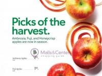 Publix (Washington Apples) Flyer